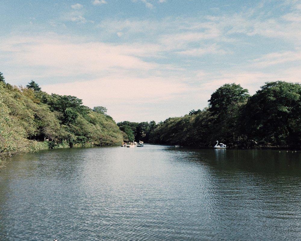 Inokashira Park, Autumn 2014.