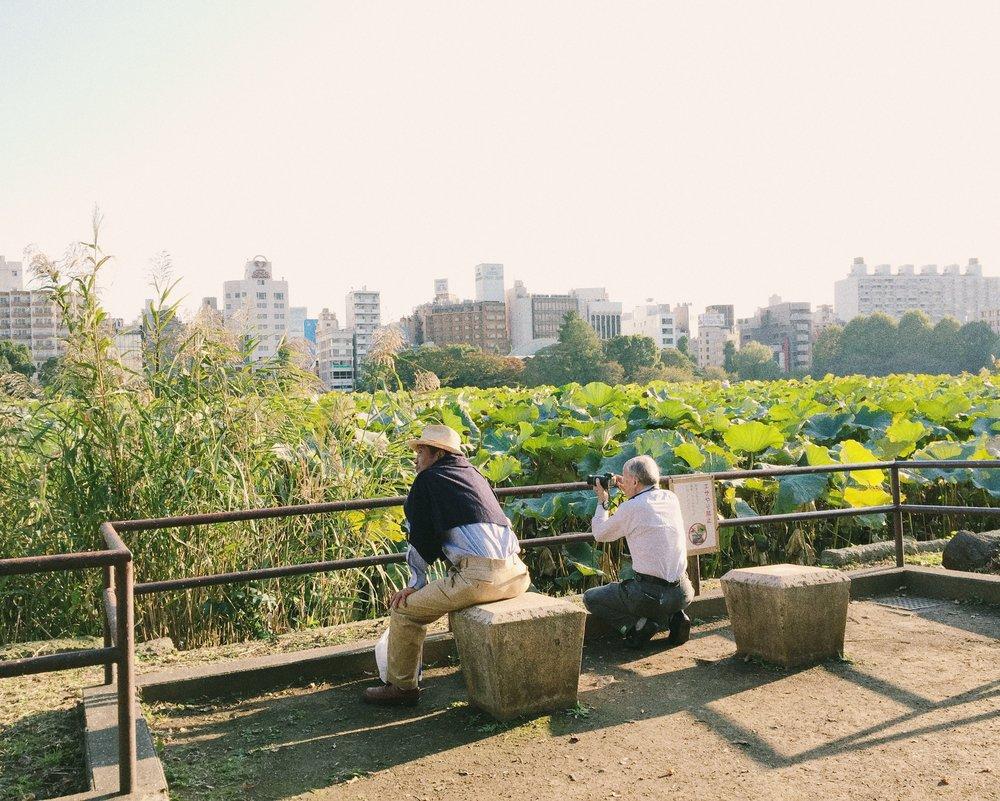 Ueno Park, Autumn 2014.