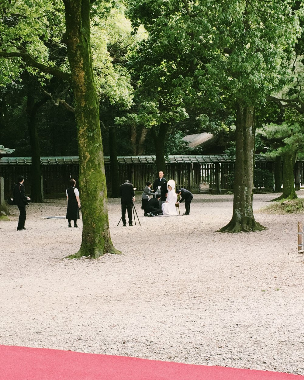Meiji Shrine, Autumn 2014.