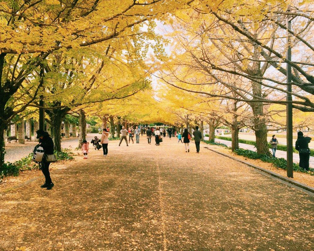 Showa Kinen Park, Autumn 2014.