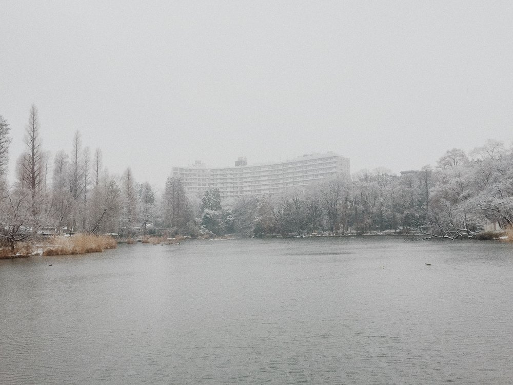 Inokashira Park, Winter 2015.