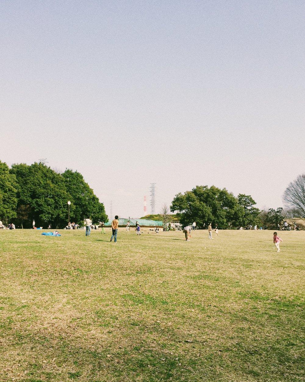 Jindai Botanical Park, Spring 2015.
