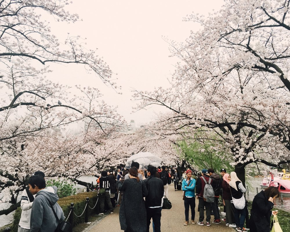 Ueno Park, Spring 2015.