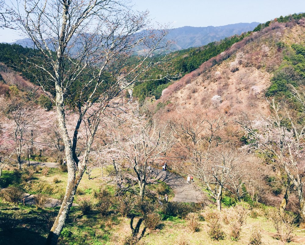 Mount Yoshino, Spring 2015.