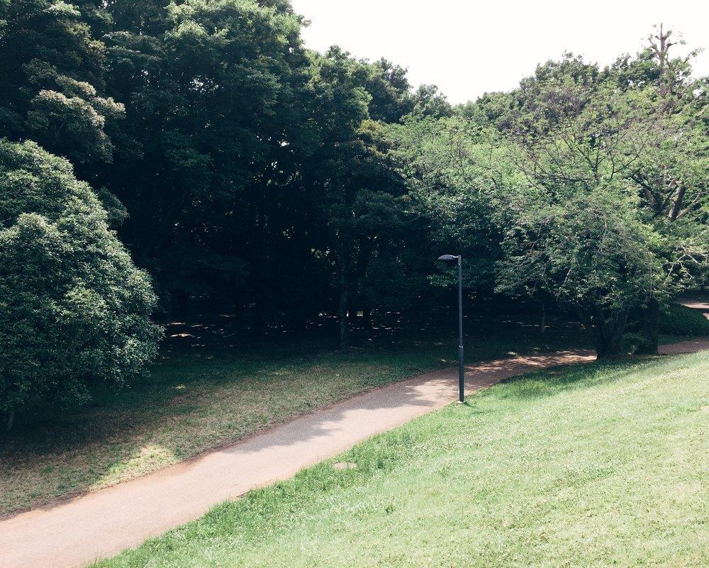 Jindai Botanical Park, Summer 2015.