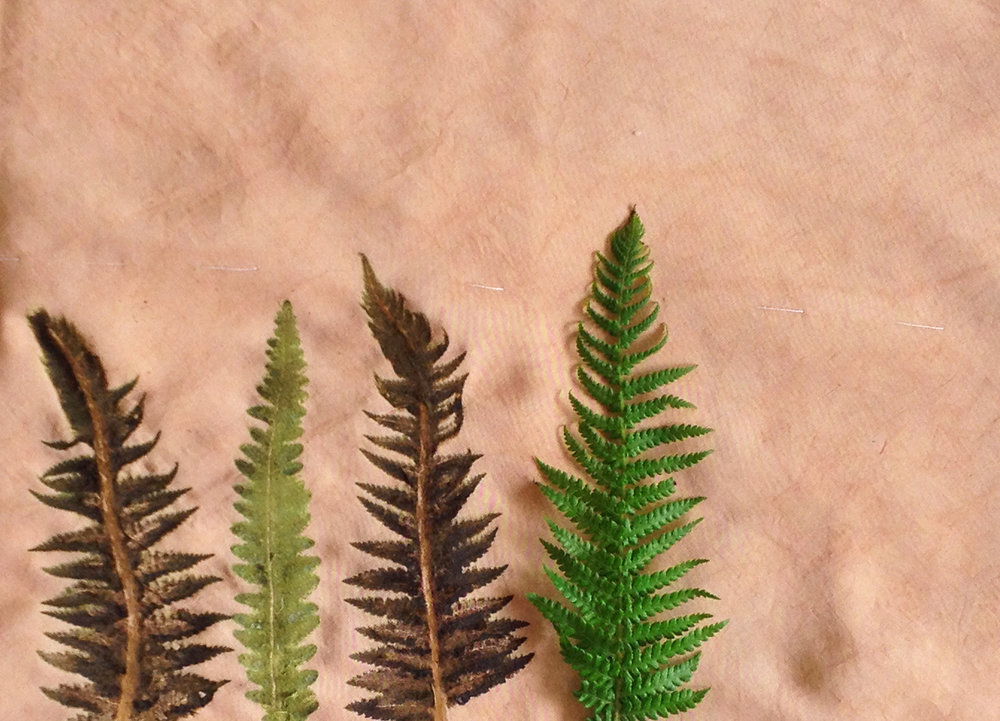 Ferns printed on ao textiles bespoke taffeta fabric and over dyed with natural colour.