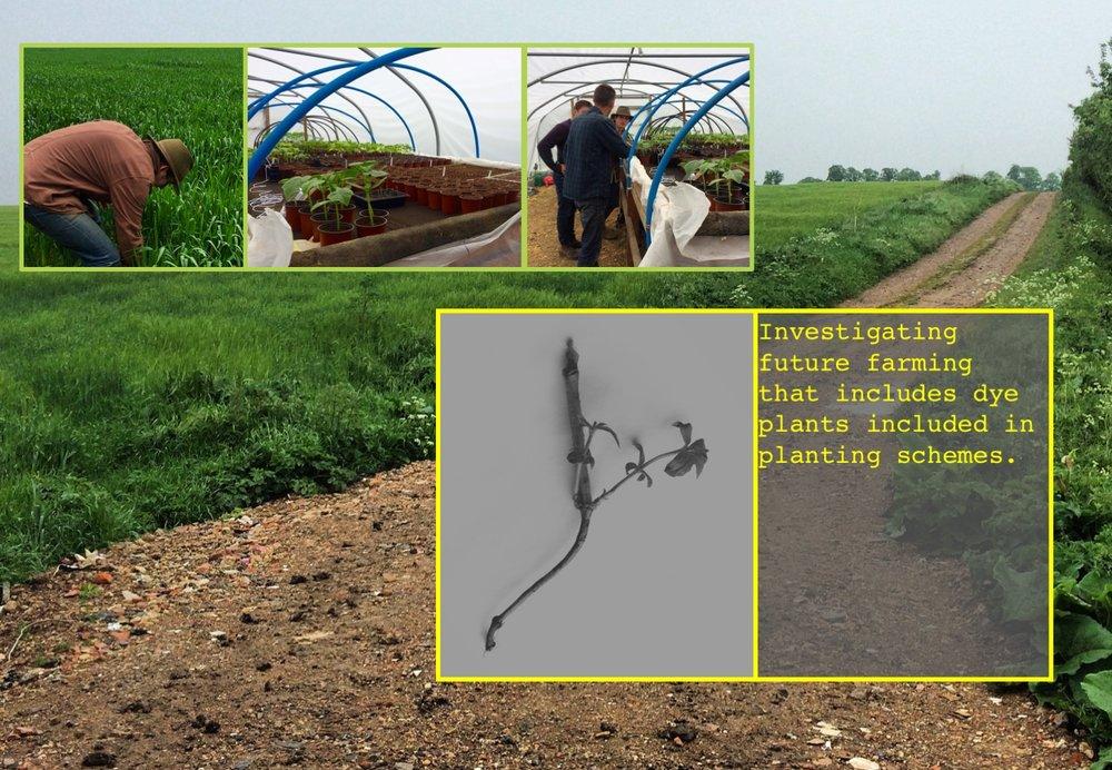duchess_farms_oscar.jpg