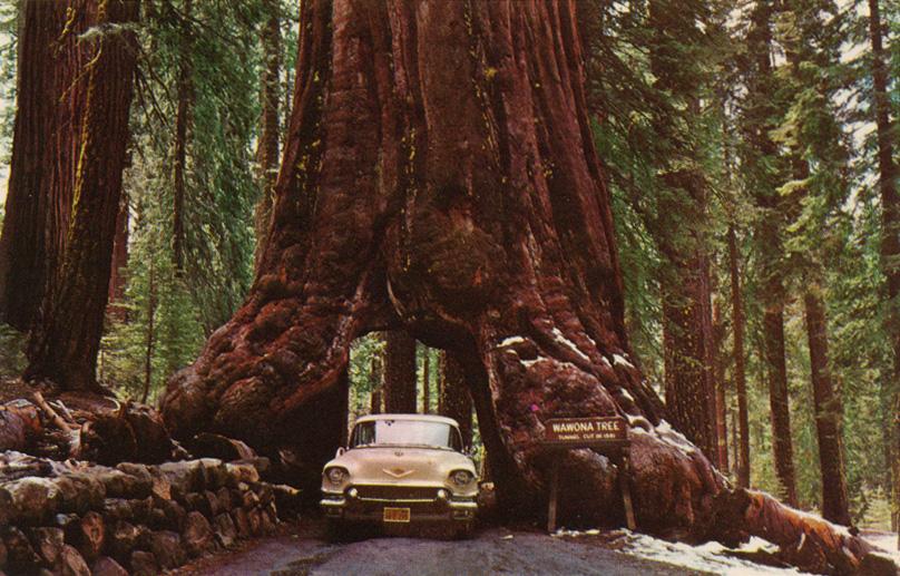 Wawona_Drive_Through_Tree_Yosemite_CA_002.jpg