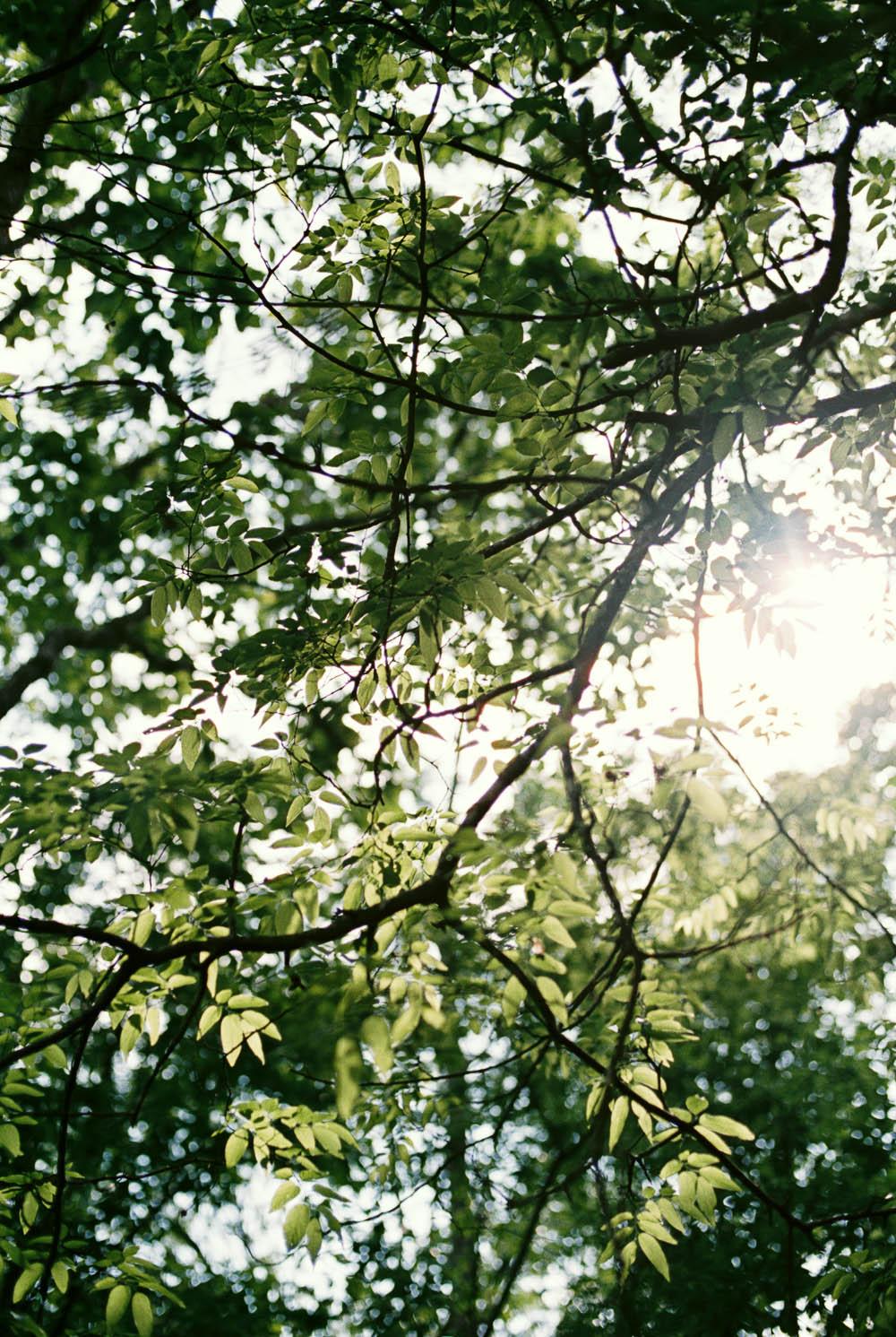 wrens nest documentary natural film wedding photographers ©2016abigailbobophotography-1.jpg