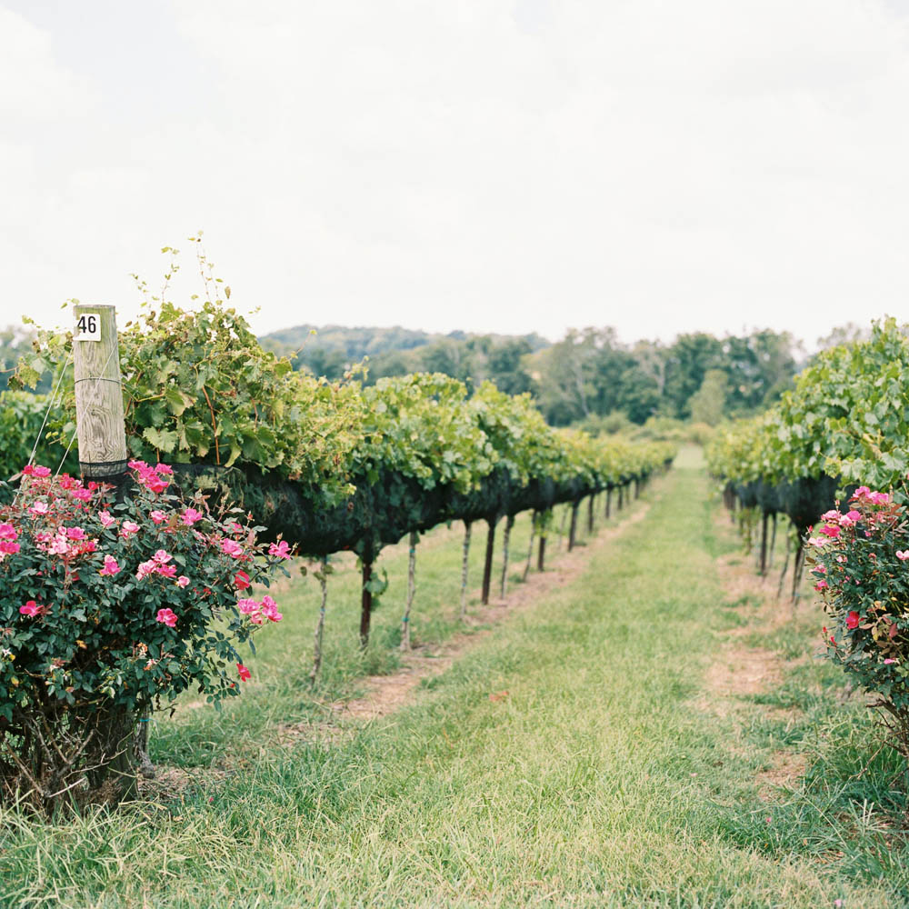 lilac farms at arrington vineyards classic film documentary wedding photographer in franklin real moments photographers ©2016abigailbobophotography-1.jpg