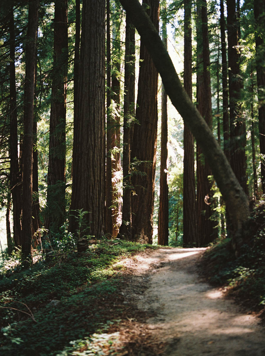 redwoods big sur film elopement photographers ©2016abigailbobophotography-2.jpg