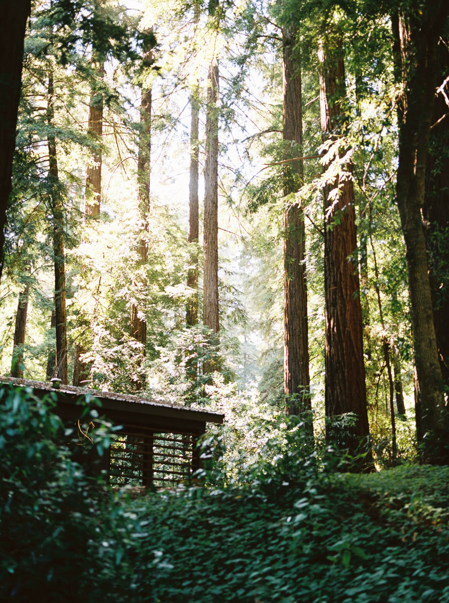 redwoods big sur film elopement photographers ©2016abigailbobophotography-7.jpg