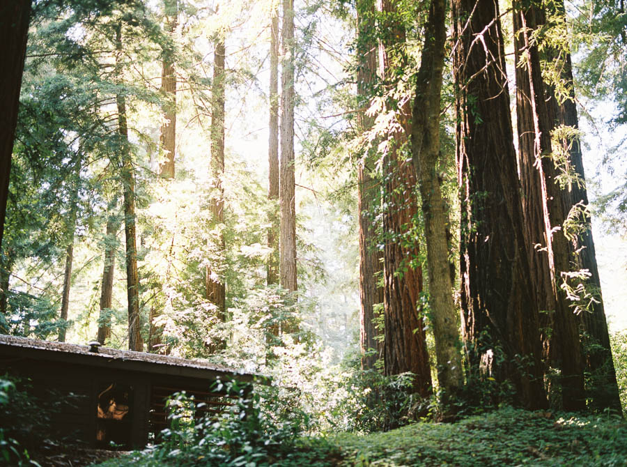 redwoods big sur film elopement photographers ©2016abigailbobophotography-9.jpg
