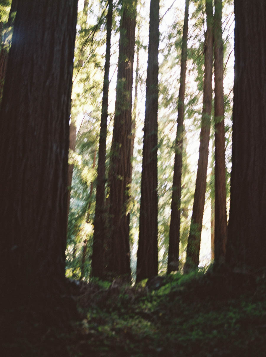 redwoods big sur film elopement photographers ©2016abigailbobophotography-43.jpg