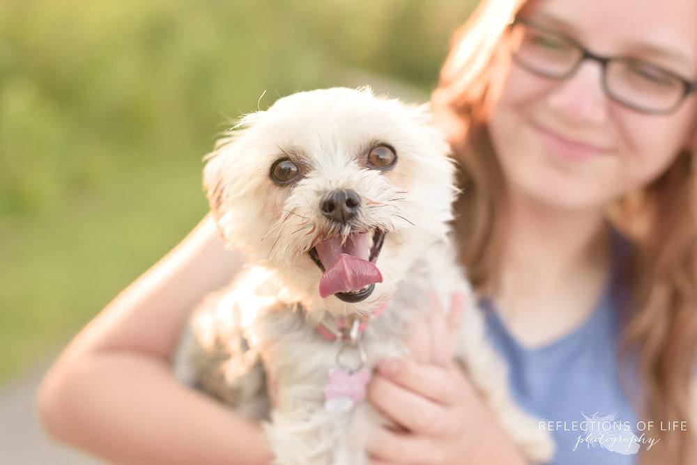 Morkie Pet photography Grimsby Ontario Canada