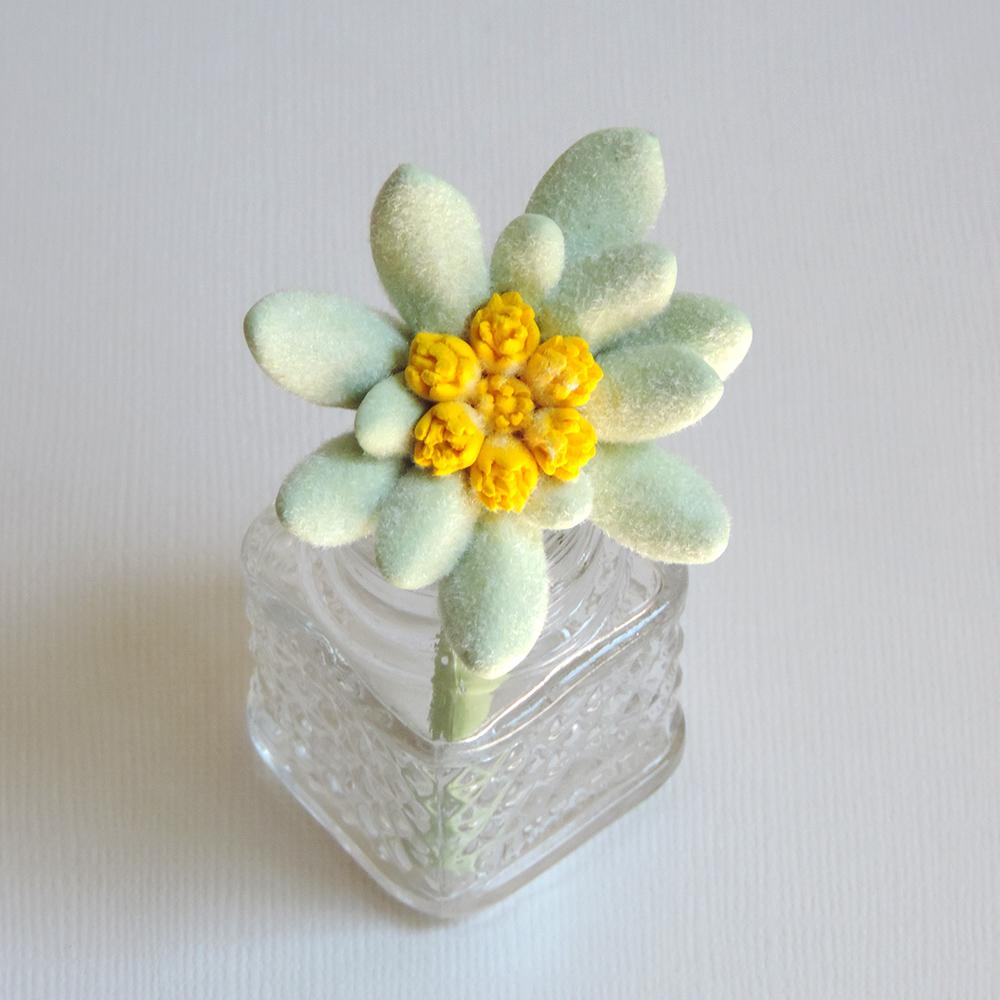 edelweiss_02.jpg