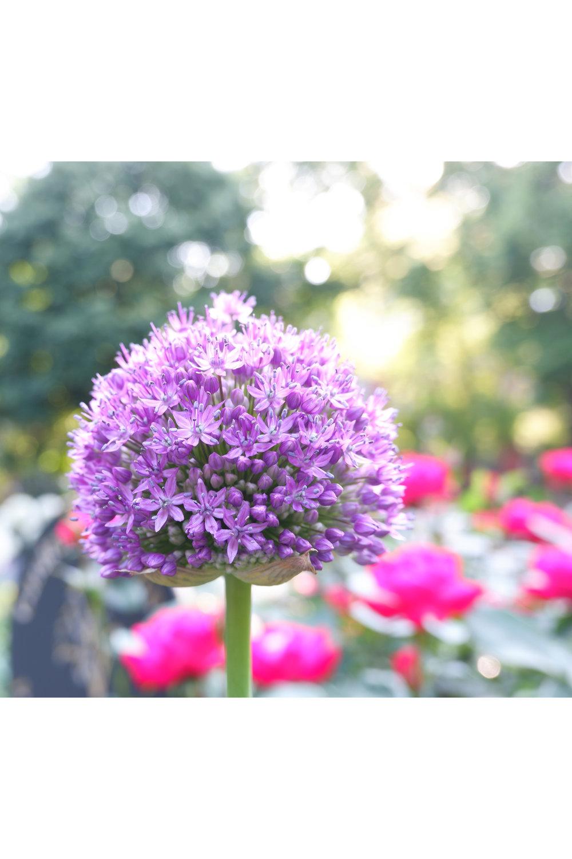 flowersssss.jpg