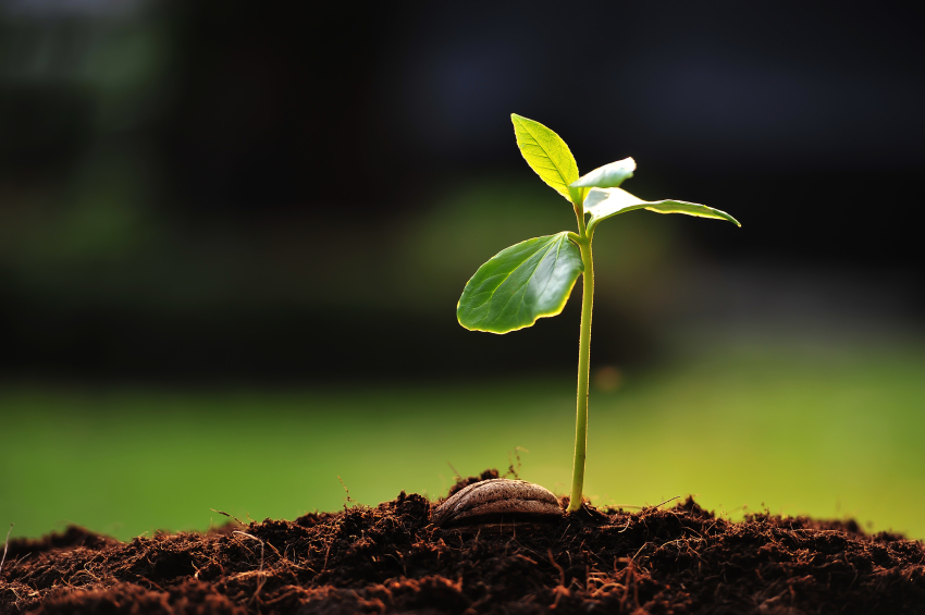 growth plant.jpg