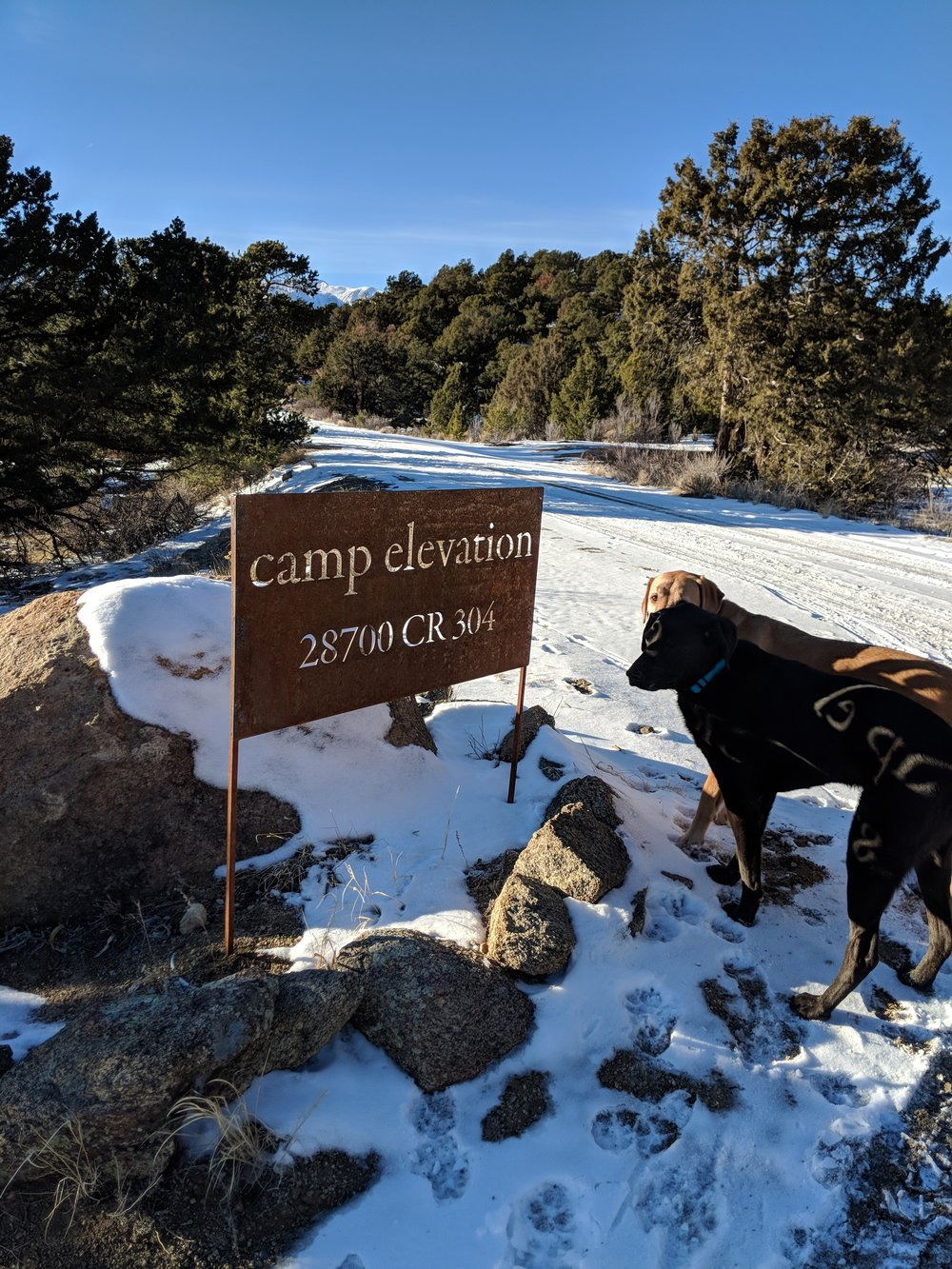 camp elevation sign and dogs.jpg