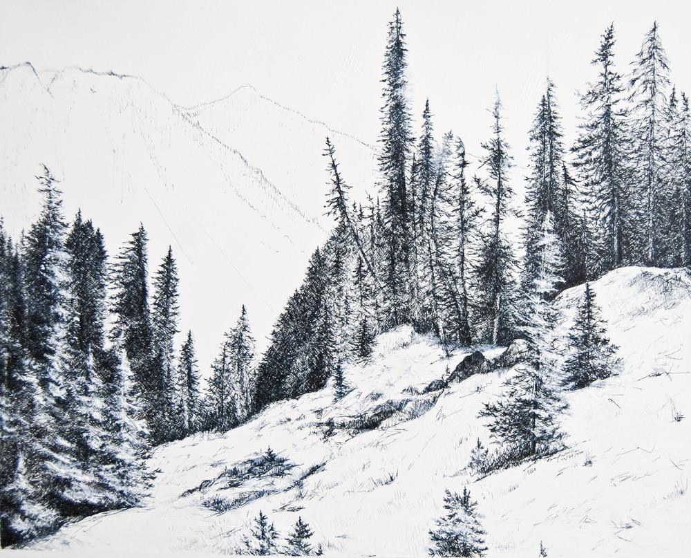 "Nisqually Vista, Paradise Park, Mt Rainier, 2009 11"" x 17"""