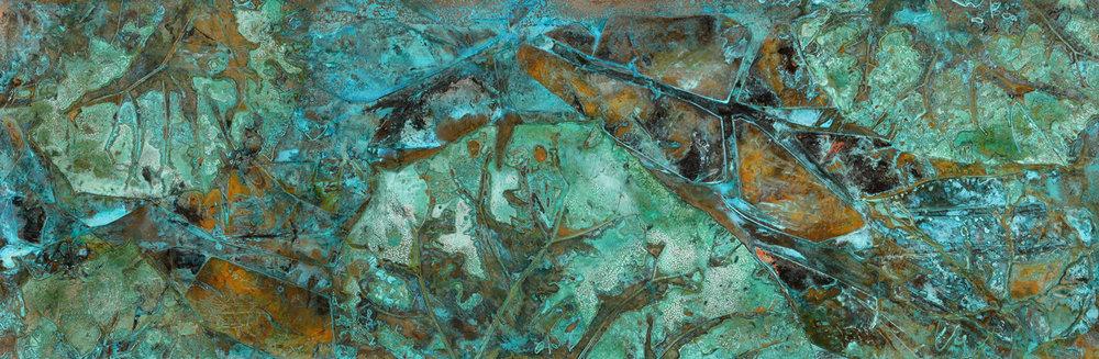 Paulownia tomentosa #8931