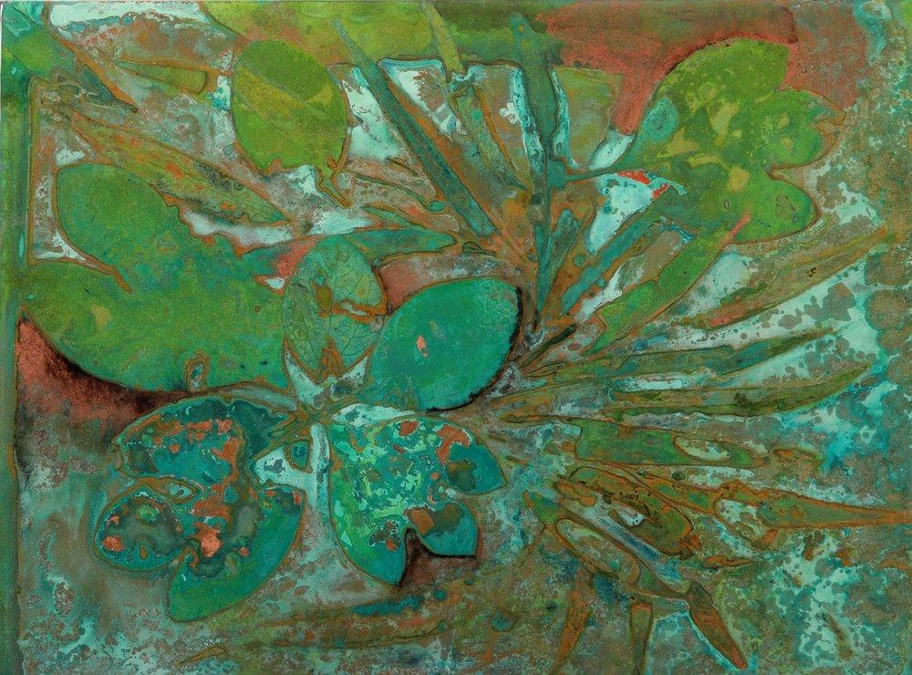 sassafras + willow #763