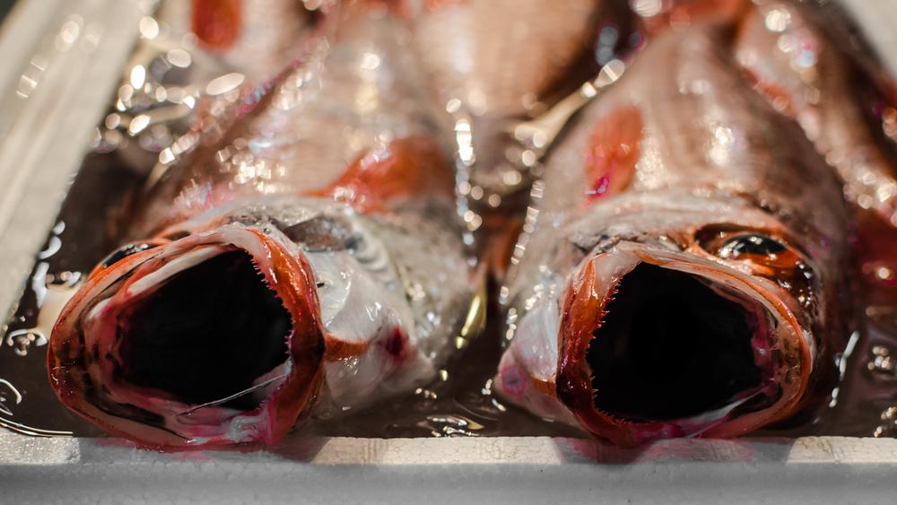 Tsukiji Market, 10-56-04 14-06-14.jpg