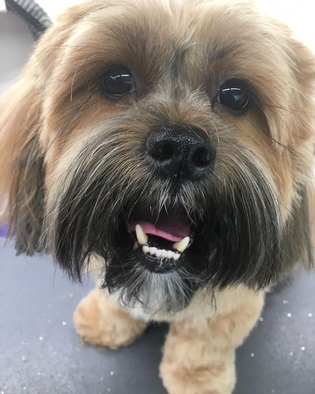 Mr. Happy dog! 💕#colleensmobilepetspa