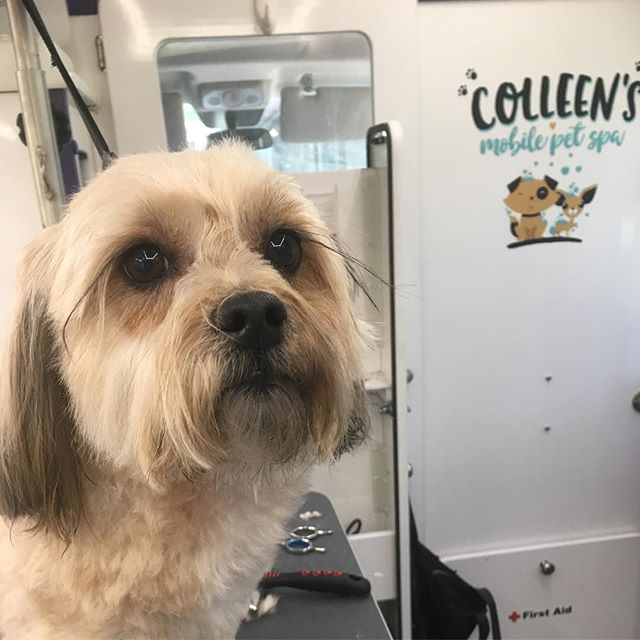 Those amazing eye lashes tho!! #colleensmobilepetspa
