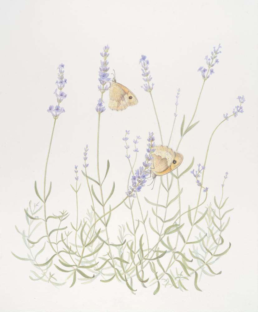 lavender_17x14_gouache.jpg