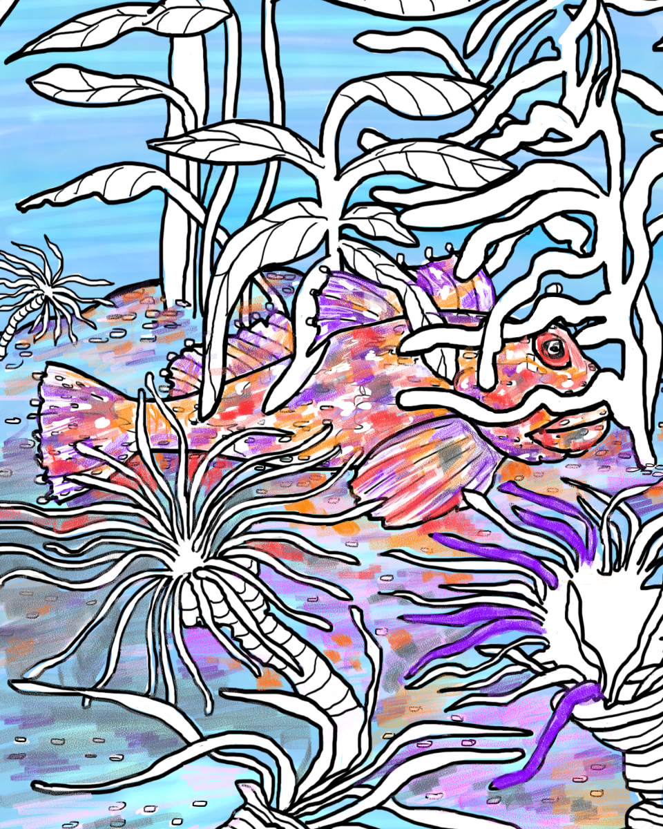 Where Is The Cabazon Fish? Color your own Color and Find Page by Elizabeth B Martin