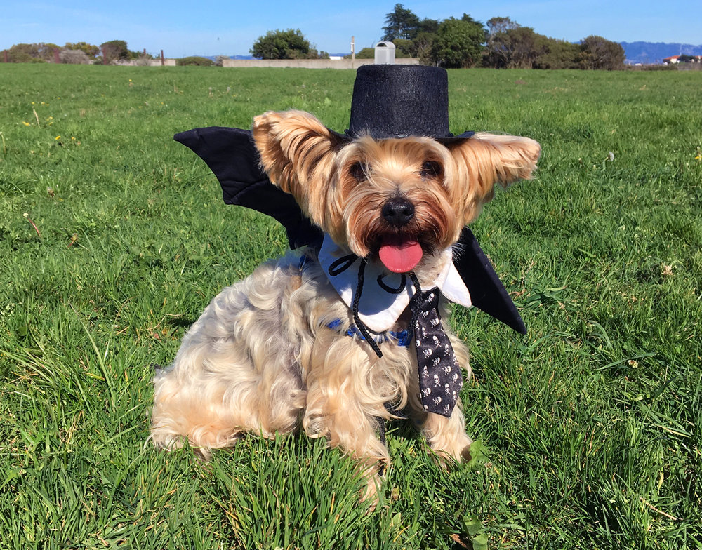 Henry as a bat for Halloween