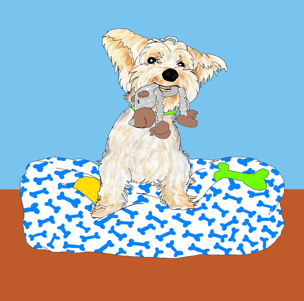 Henry the Yorkie, Illustration by Elizabeth B Martin
