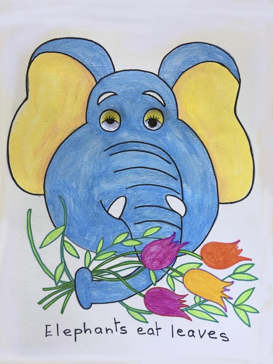 Elephant-animal-face