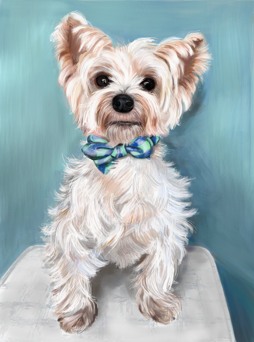 Henry with a Bow Tie, by Elizabeth B Martin