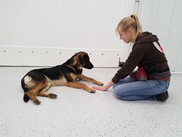 "Mesa, a Shepherd Mix, works with Roxi on ""leave it"". She's a fast learner!"