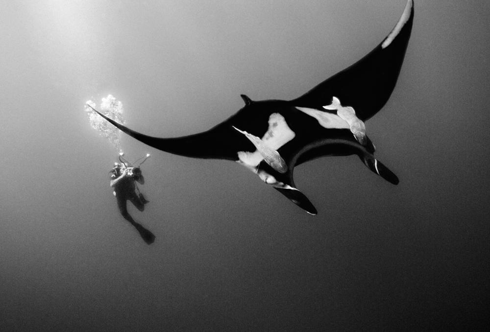 Ernie Underwater Clevenger_Ralph_020719_1705.jpg