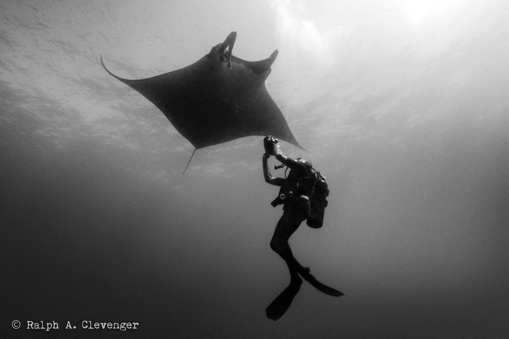 Ernie photographing manta rays off Socorro Island, Mexico.