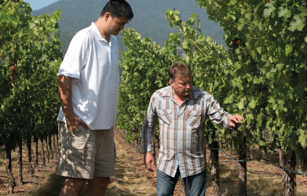 Yao Ming Winery