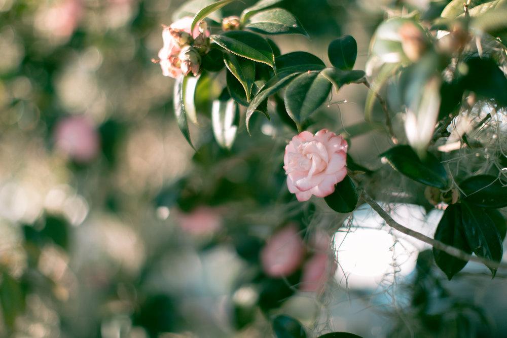 Sarah Lovelace-1.jpg