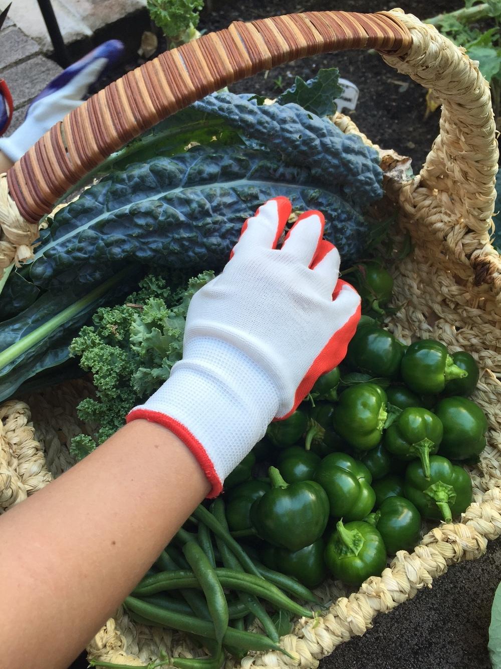 Crown Street Kitchen Garden Website