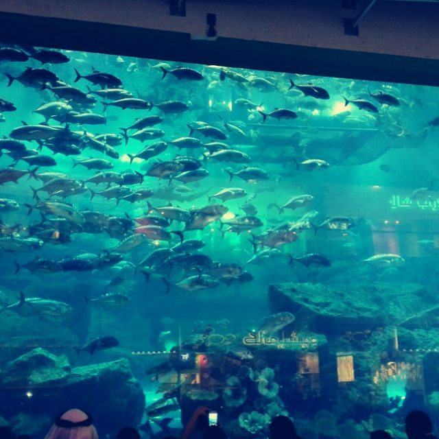 #dubai #shopping #mall #water #blue #shark #aquarium
