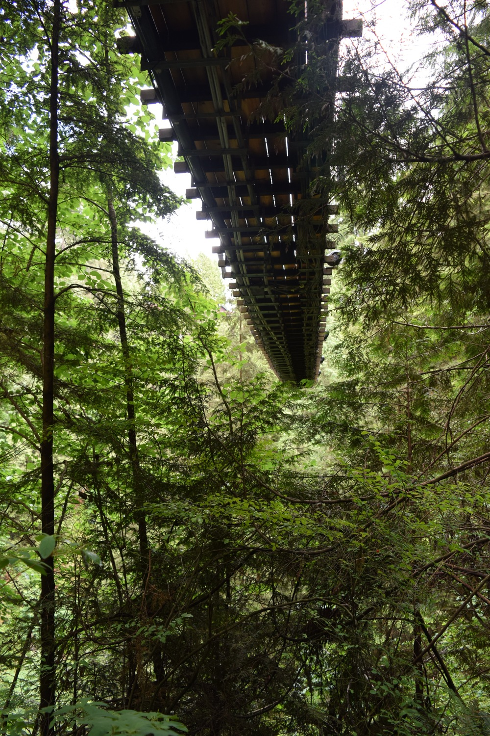 Capilano Suspension Bridge Underneath.jpg