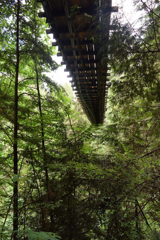 Capilano Suspension Bridge Underneath.jpg