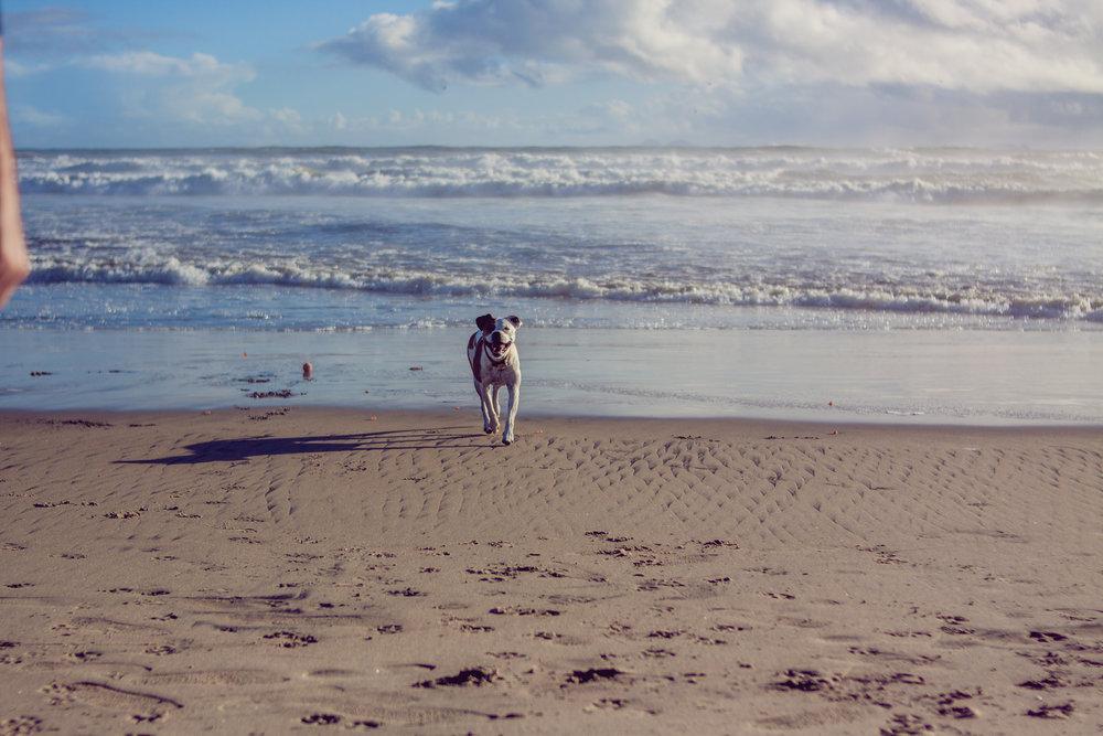 2017_02_BeachDay-126.jpg