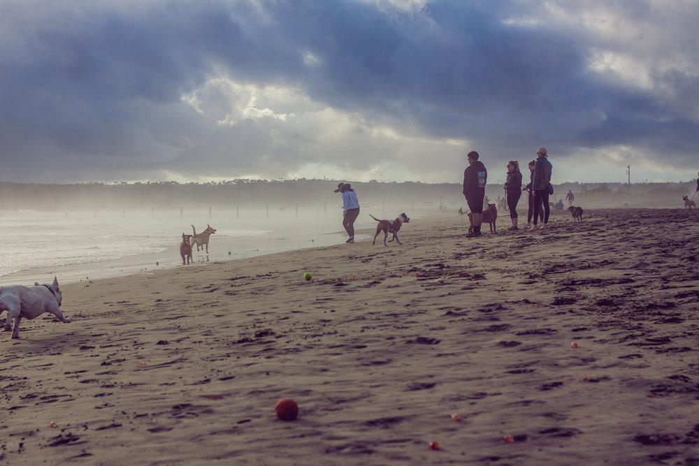 2017_02_BeachDay-157.jpg