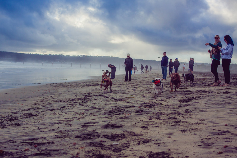 2017_02_BeachDay-160.jpg
