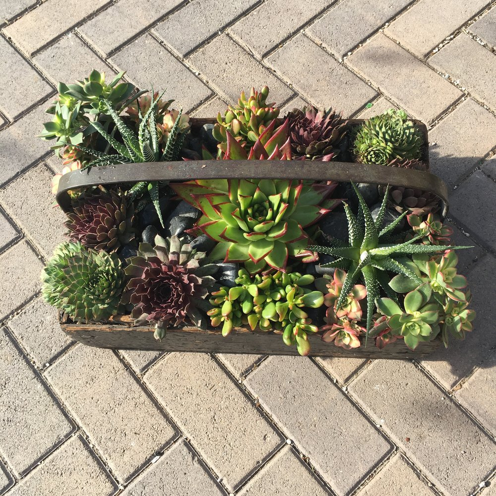 Antique Wooden Box Succulent Arrangement