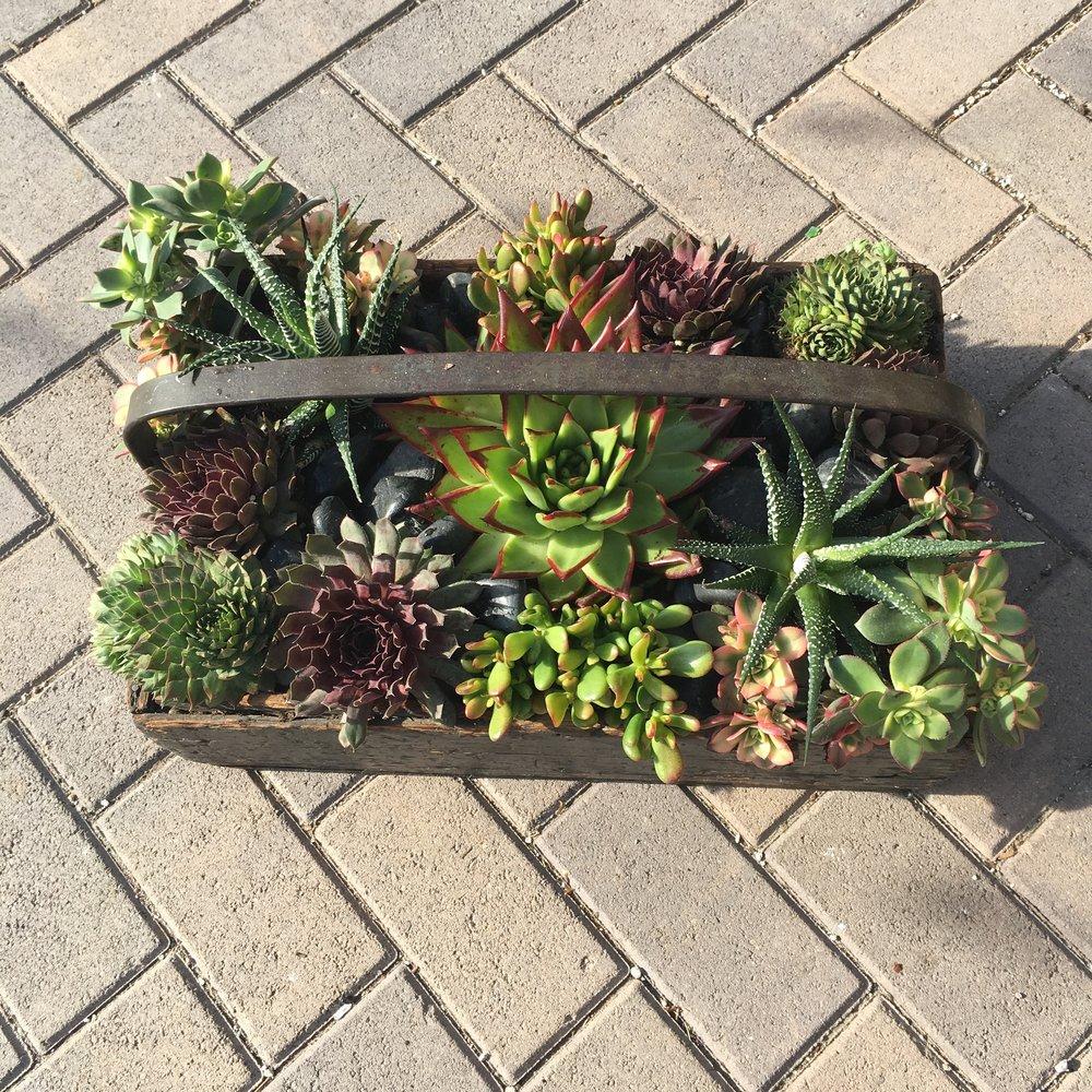 10. Antique Wooden Box Succulent Arrangement