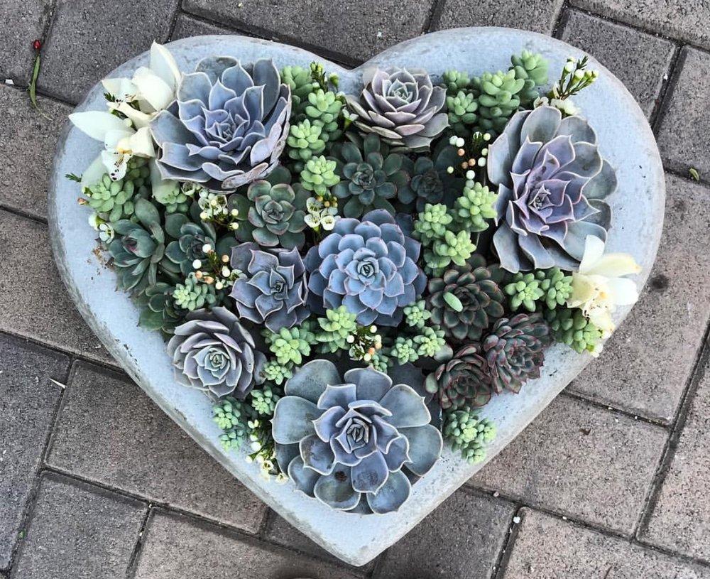 48. Heart Succulents